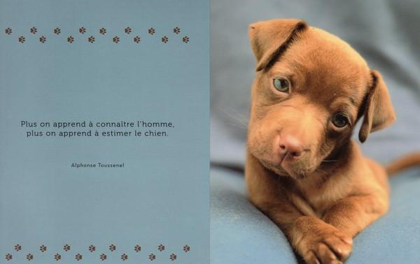 citations sur le chien - Page 3 98089410