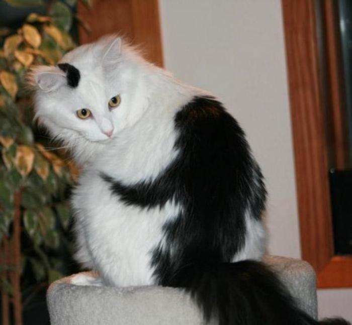 Curiosités Cat-ma10