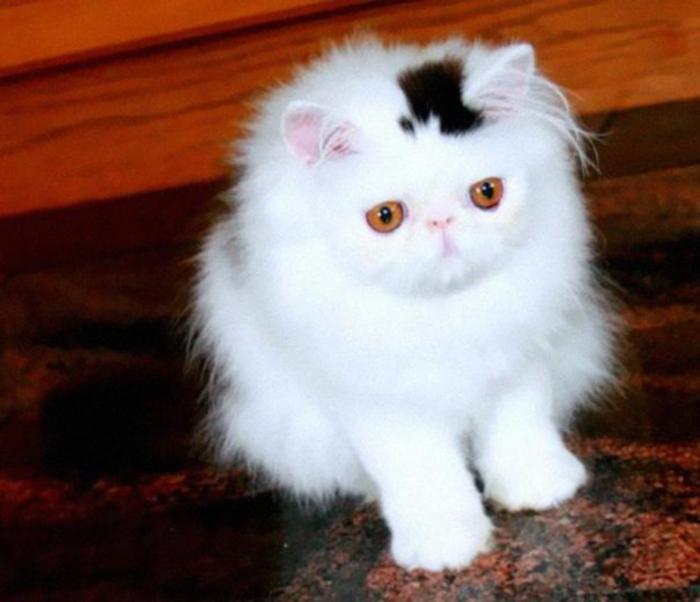 Curiosités Cat-ma11