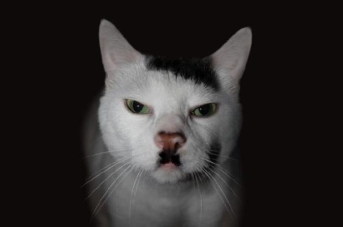 Curiosités Cat-ma12