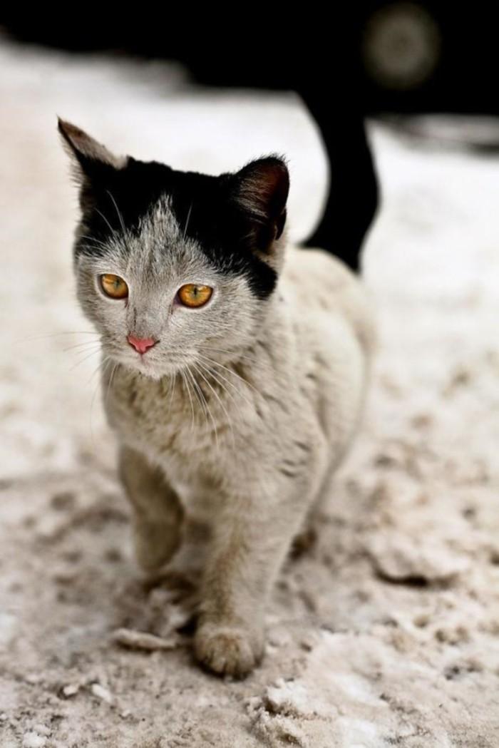 Curiosités Cat-ma13