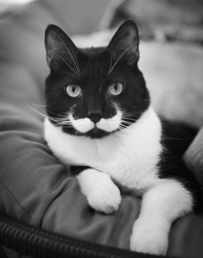 Curiosités Cat-ma14