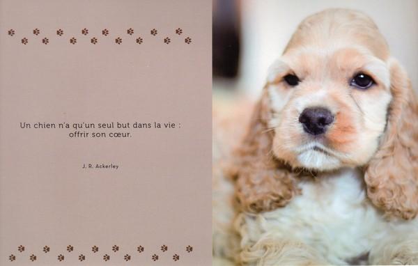 citations sur le chien - Page 3 Cfd72511