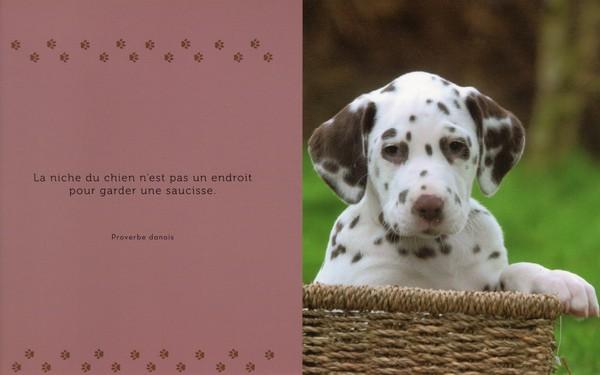 citations sur le chien - Page 3 D5882810