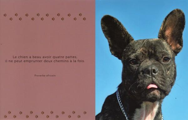 citations sur le chien - Page 3 F9fd4110