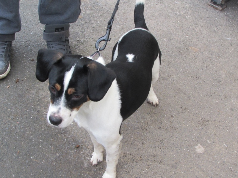CHANEL x Beagle Img_3419