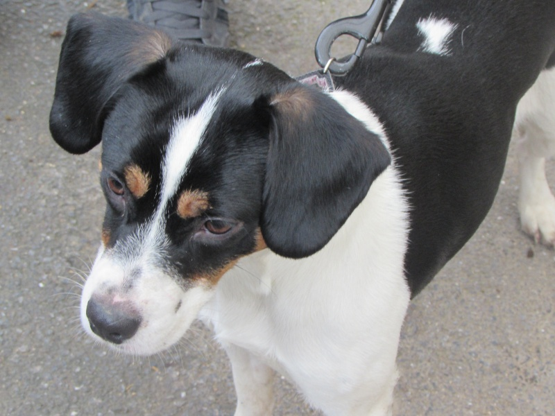 CHANEL x Beagle Img_3420