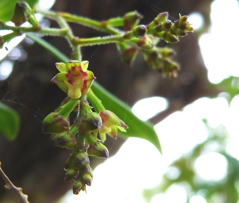 Janvier :Ce beau mois des orchidées 0091110