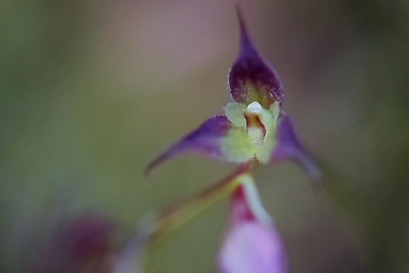 Janvier :Ce beau mois des orchidées 047210