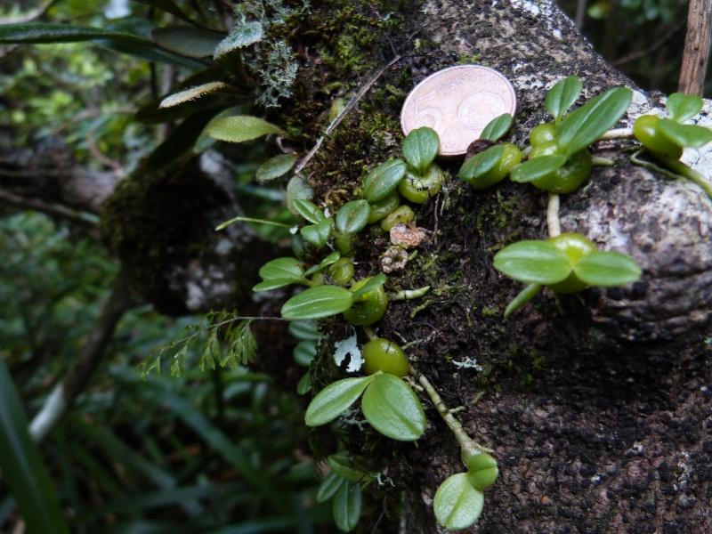 Janvier :Ce beau mois des orchidées 123110