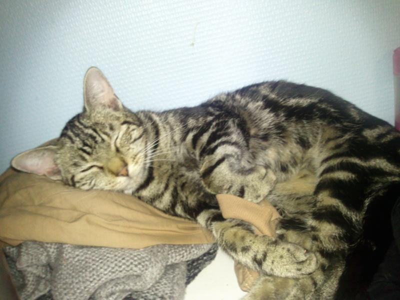 Chipie - Tigrée noire - née en 2008 en FA - Page 3 Photo211
