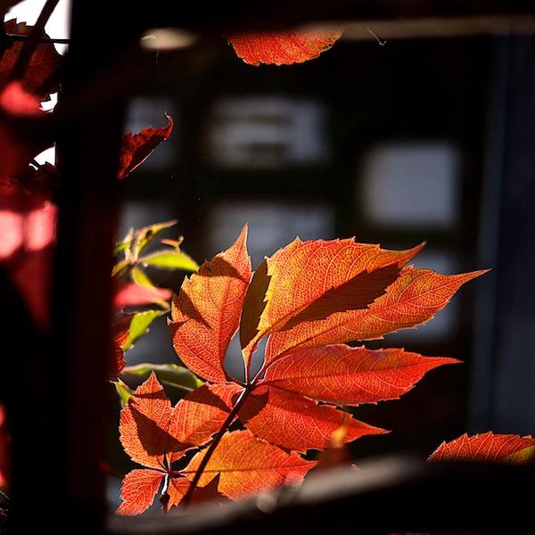 c'est l'automne... _1070610