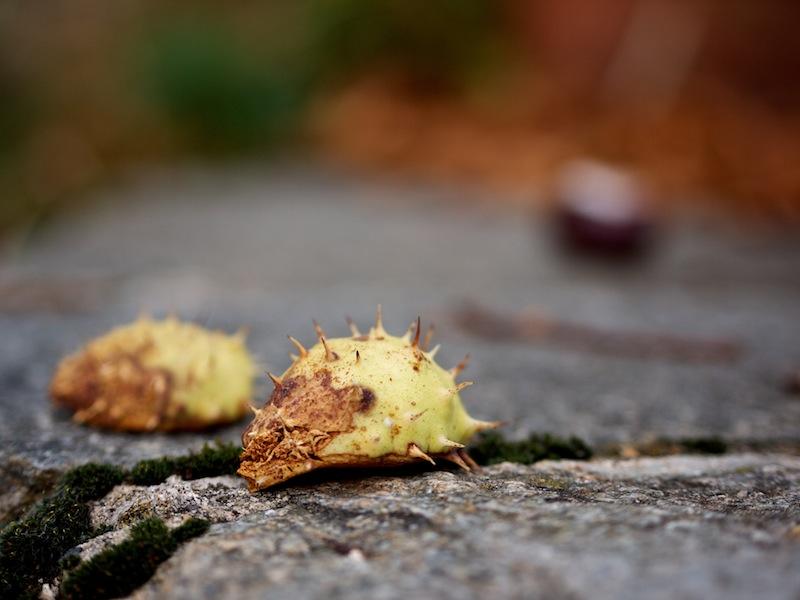 c'est l'automne... _1070711