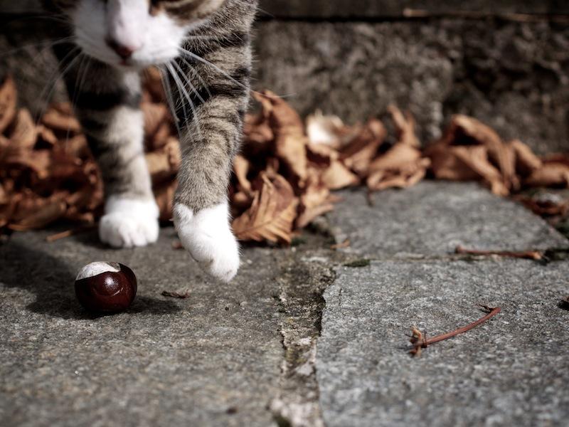 c'est l'automne... _1070713
