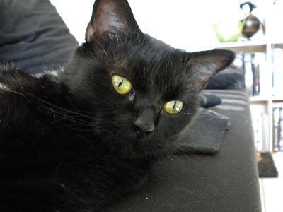 SOREN, 8 ans, câlinou FIV à adopter sans chat (27) Dscn1910