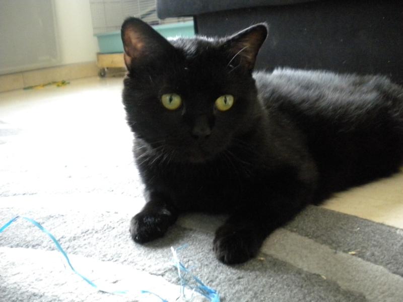 SOREN, 8 ans, câlinou FIV à adopter sans chat (27) Soren_11