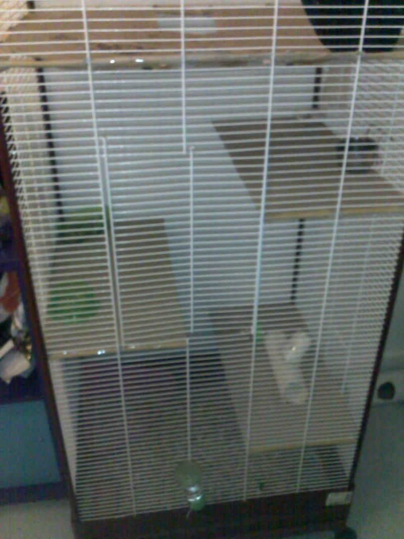 Echange voliere contre cage 11012011