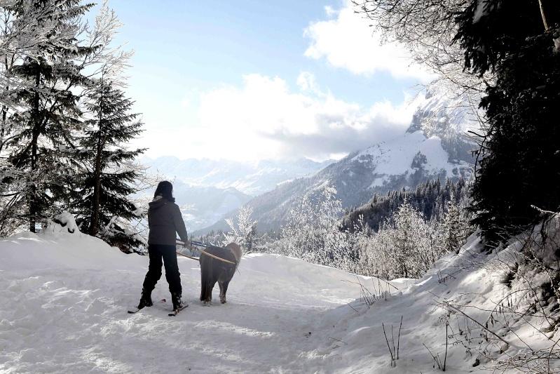 Ski joering et traineau _amg_410