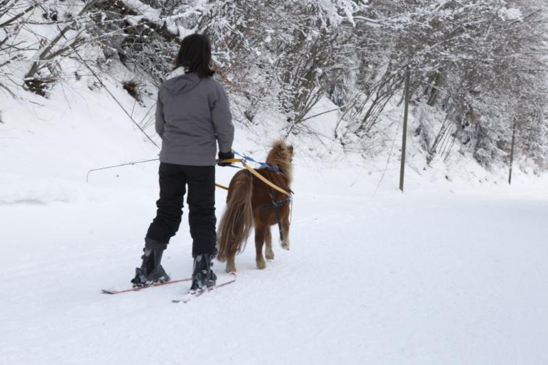 Ski joering et traineau _mg_4510