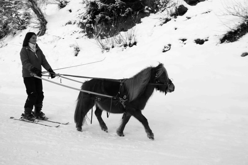 Ski joering et traineau A_mg_410