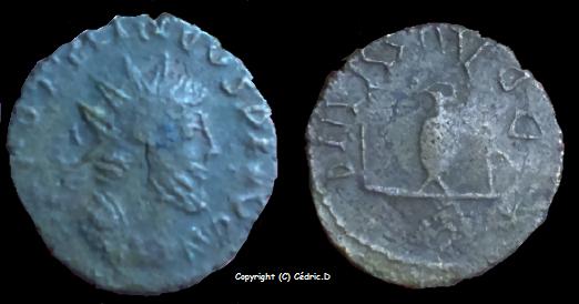 Collection imitation TETRICUS Tetric10