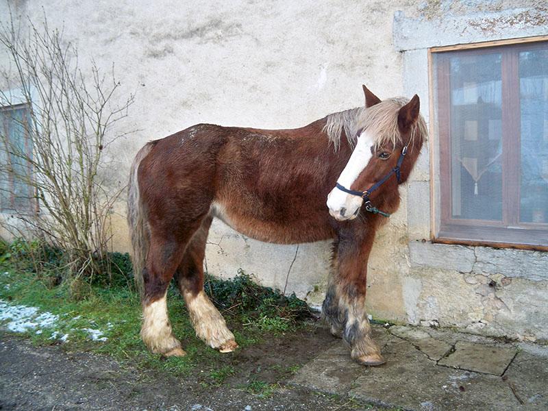 NOISETTE - Trait Breton née en 2001 - placée hors association Lllll_10
