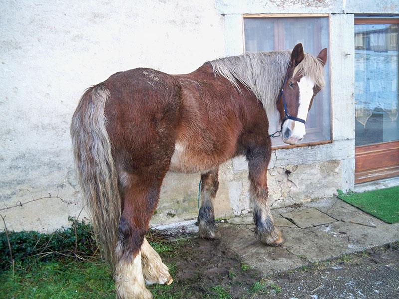 NOISETTE - Trait Breton née en 2001 - placée hors association Lllll_11