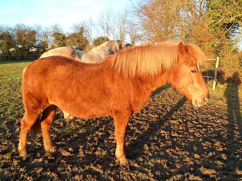 EGLANTINE - ONC selle typée Appaloosa née en 1993 - adoptée en août 2011 par anne-canelle - Page 5 Sam_1817
