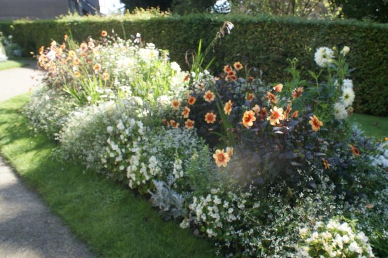 Association de plantes dans vos massifs  Jardin13