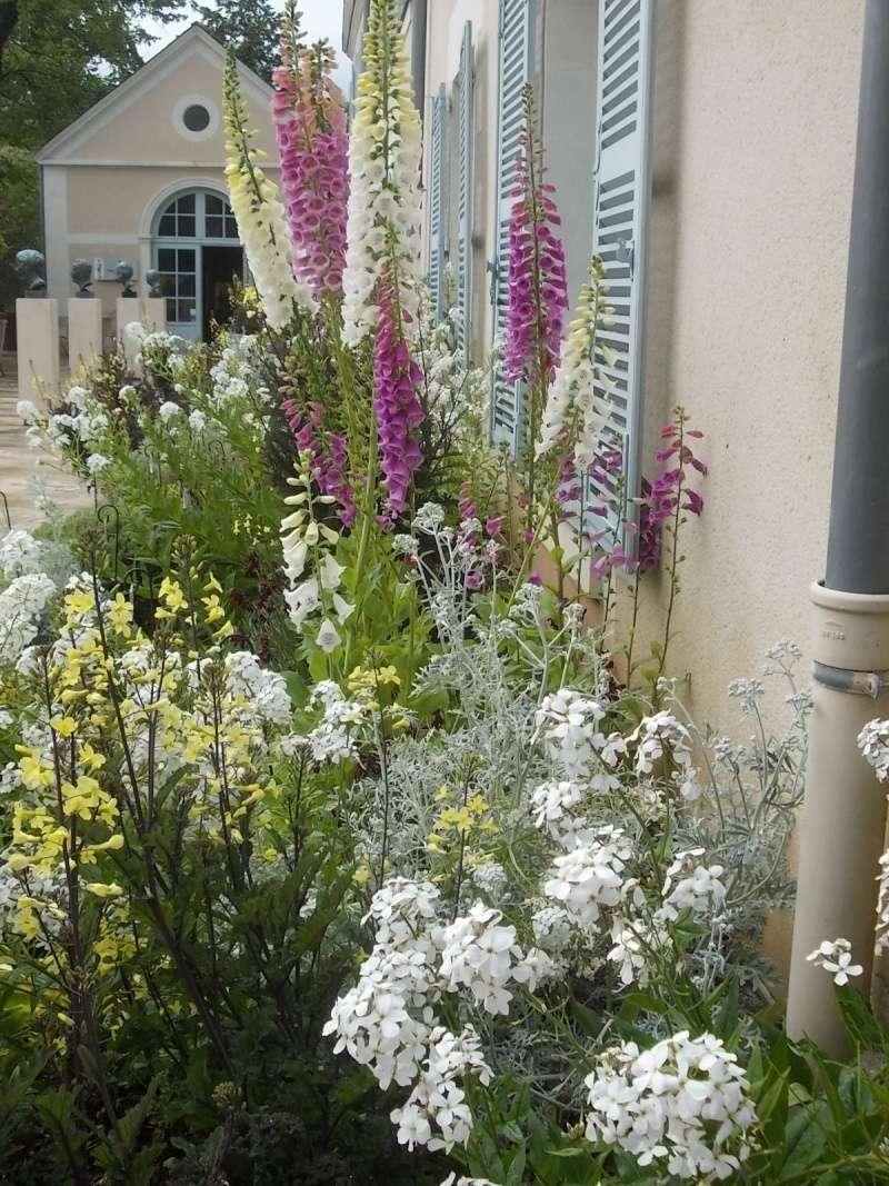Association de plantes dans vos massifs  Parc_d16