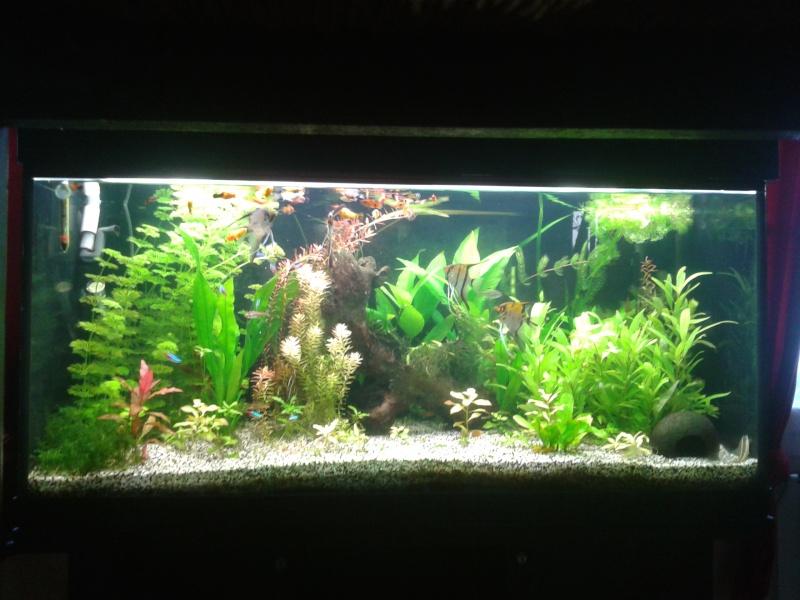 aquariums  2015-013