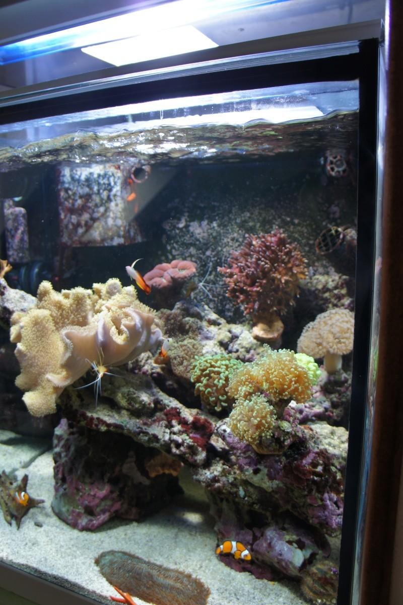 aquarium recifal - Page 6 Dsc01712