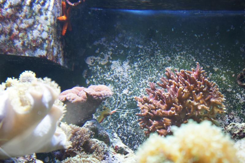 aquarium recifal - Page 6 Dsc01713
