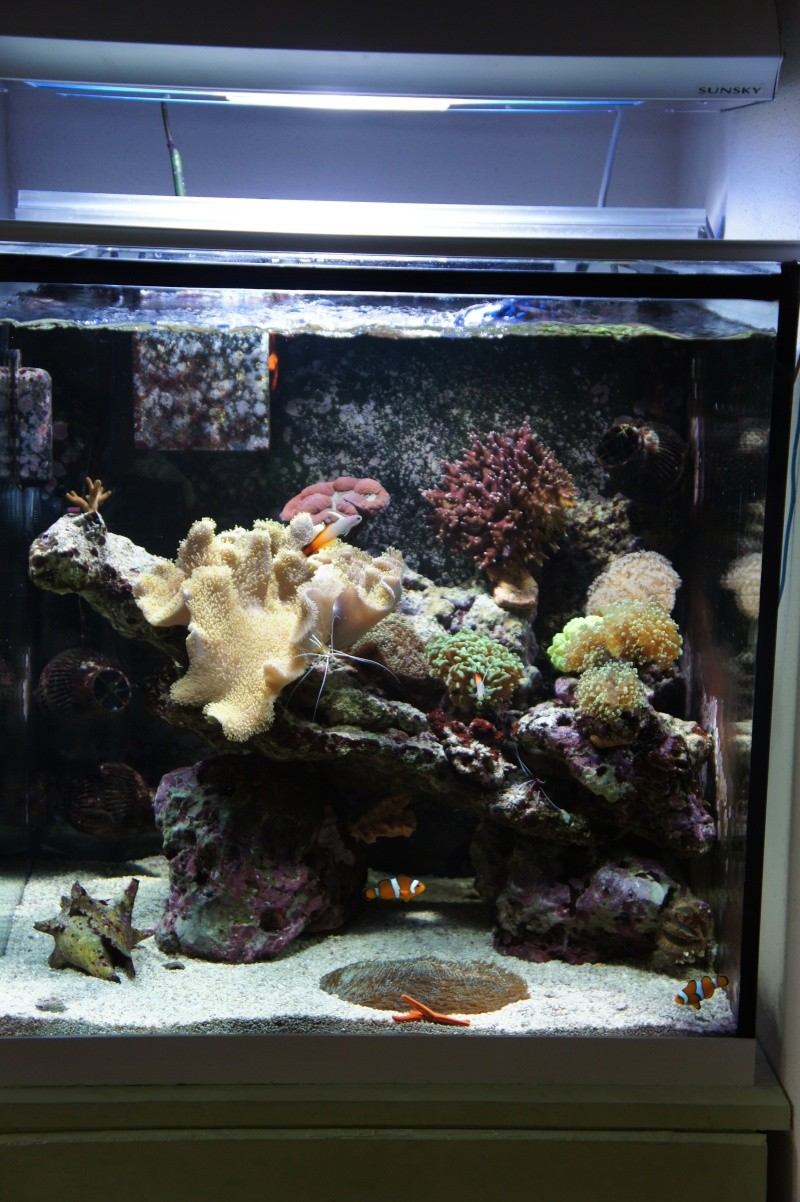 aquarium recifal - Page 6 Dsc01714