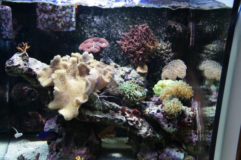 aquarium recifal - Page 6 Dsc01716