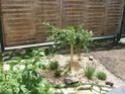 En avant pour l'aménagement de mon petit jardin !  Dscf0710