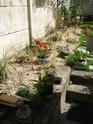 En avant pour l'aménagement de mon petit jardin !  Dscf0712