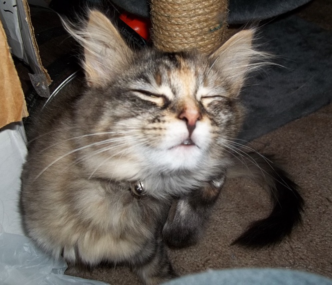 Our Furbabies - Page 7 Jazzy-10