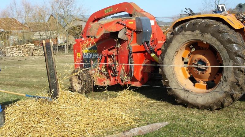 Ma pature  en agroforesterie 20150211