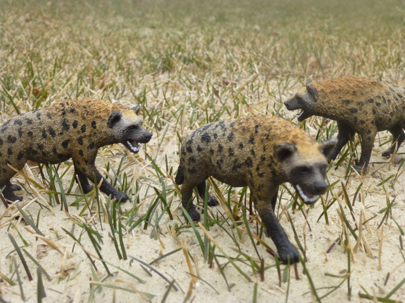 New 2015 African animals P1030419