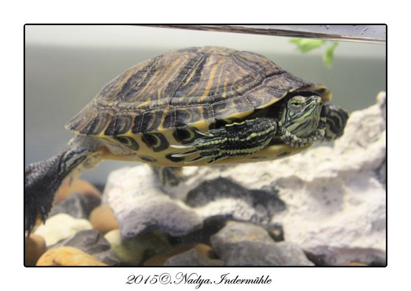 Qui est Mr Turtle Cadrer10