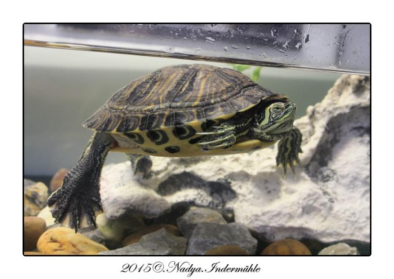 Qui est Mr Turtle Cadrer11