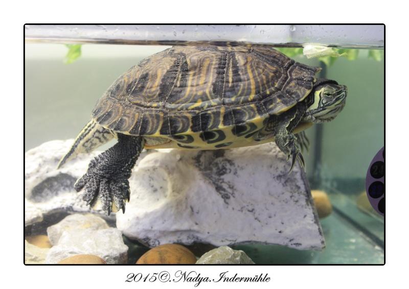 Qui est Mr Turtle Cadrer12