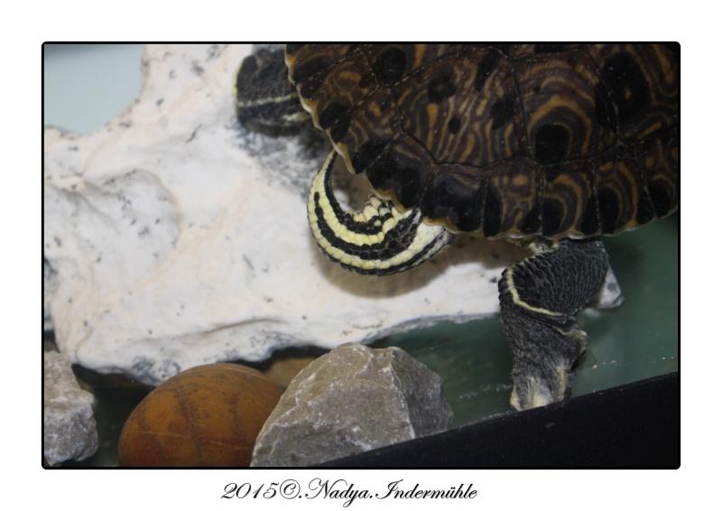 Qui est Mr Turtle Cadrer13