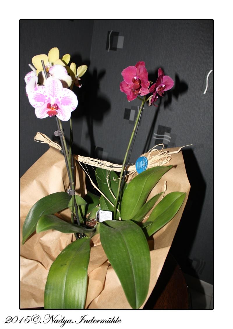 Les Orchidées Cadrer15