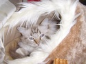 Concours photo Royal Canin Ssa53110