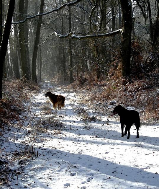 """Concours """"paysage d'hiver avec animal"""" - Les votes 36653110"""