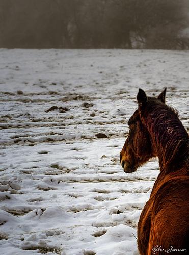 """Concours """"paysage d'hiver avec animal"""" - Les votes 36854010"""