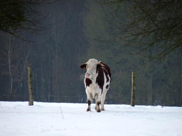 """Concours """"paysage d'hiver avec animal"""" - Les votes 42065011"""