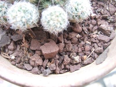 substrat succulentes et cactées Dscf4815